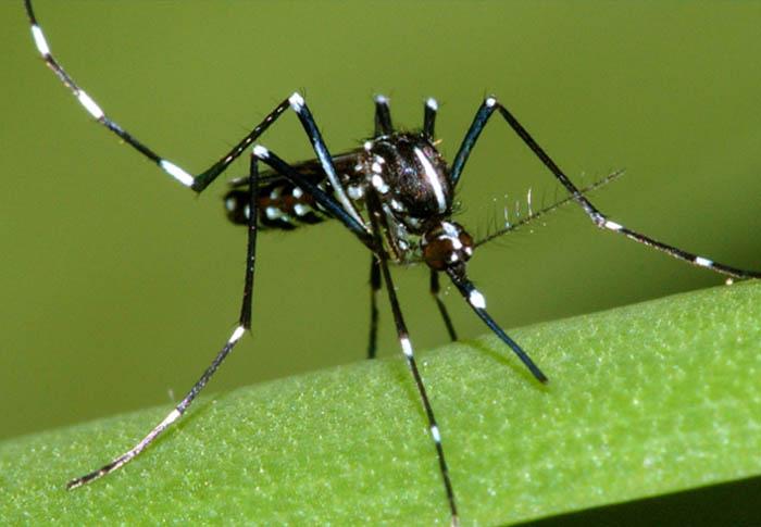 Suspeita: febre Zika pode ter ligação com casos de paralisia