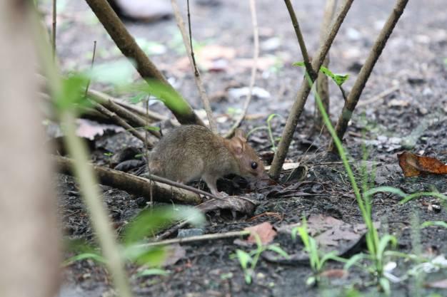 Controle de Praga em Terrenos: principais insetos e animais controlados