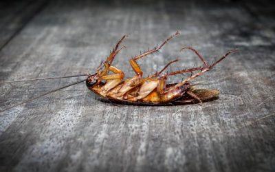 Dedetizadora em Lauro Freitas: elimine insetos e animais nocivos do seu convívio