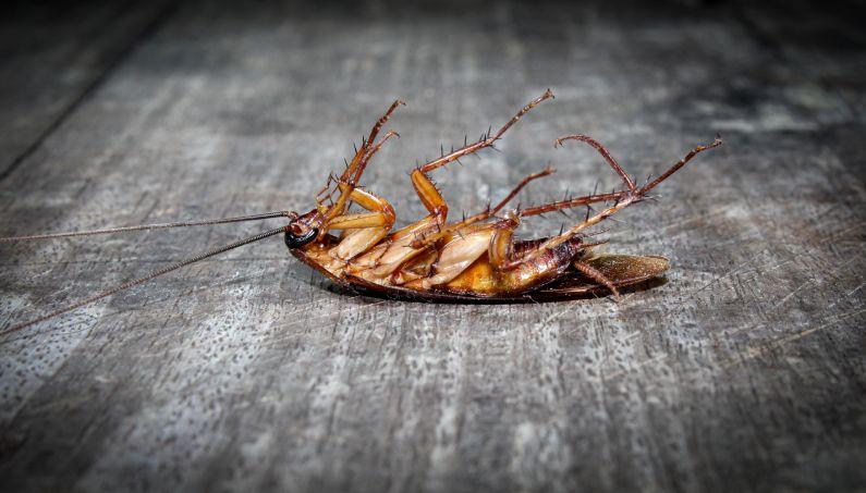 Dedetizadora em Lauro Freitas: elimine insetos e animais nocivos do seu convívio | Salvador | Bahia