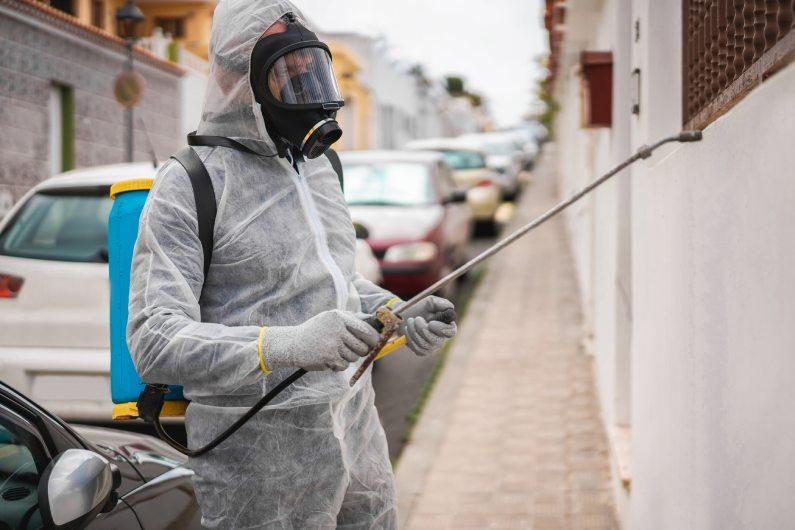 Controle de pragas em Salvador: evite doenças e danos além do coronavírus | Salvador | Bahia