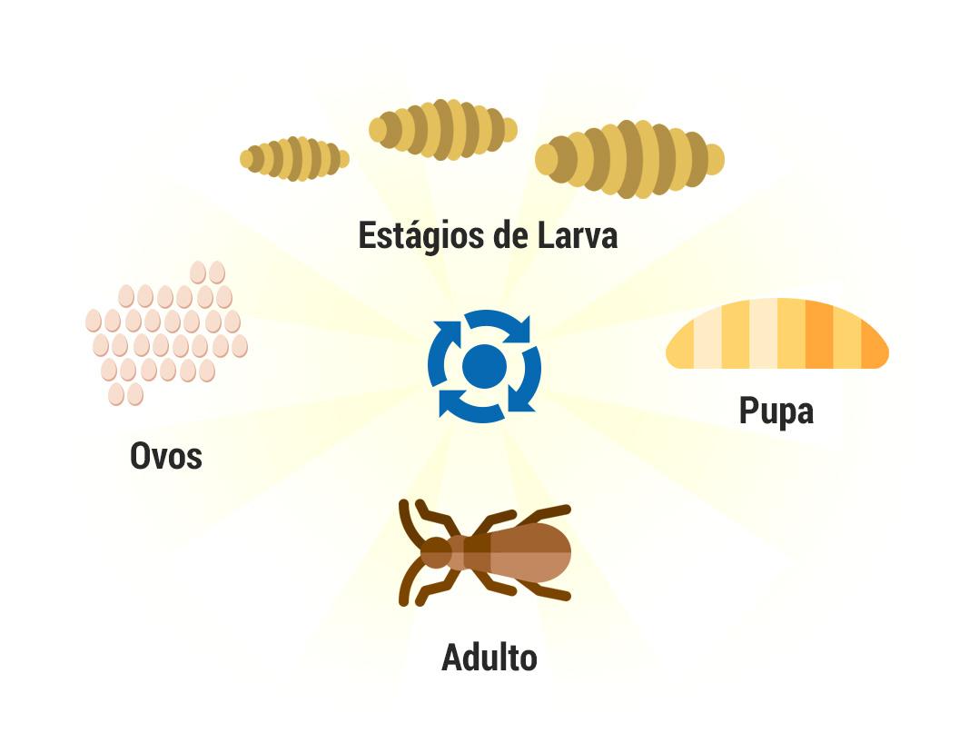 Ciclo de Brocas de Madeira