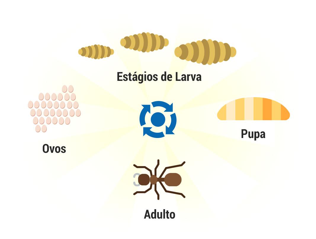 Ciclo de vida das formigas