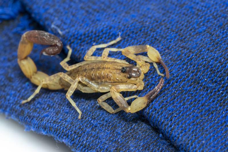Alerta contra os escorpiões em Salvador, na Bahia