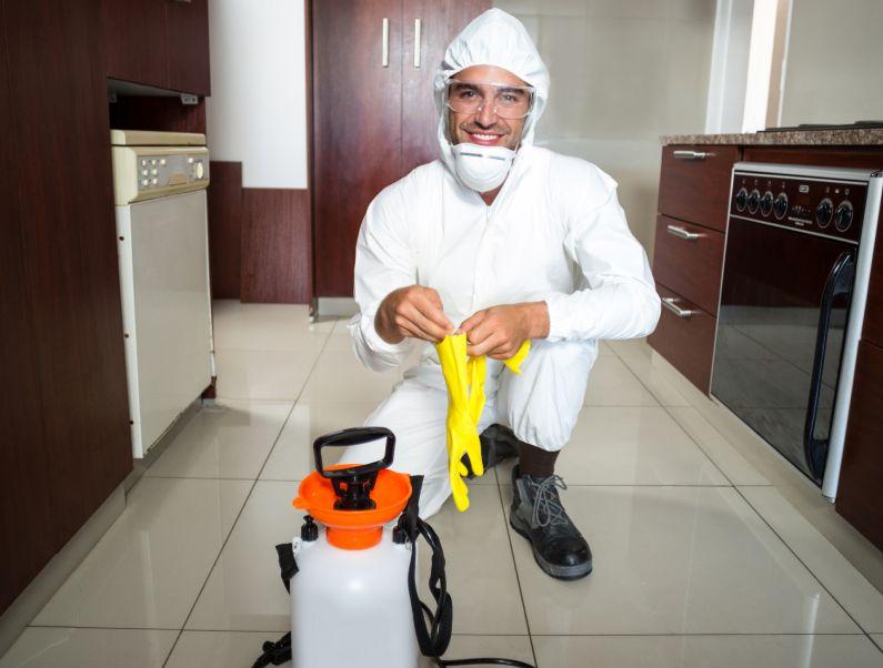 Dedetização de Baratas: como escolher uma empresa para o tratamento? | Salvador | Bahia