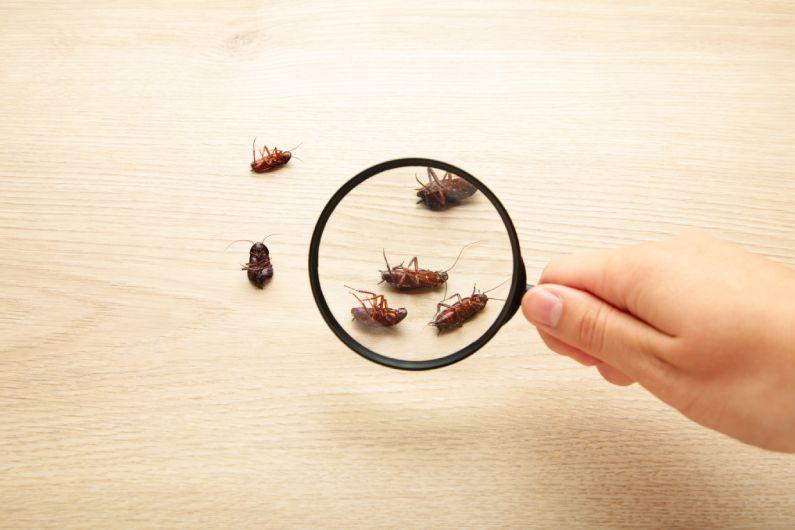 Dedetização de Baratas: conheça as principais espécies