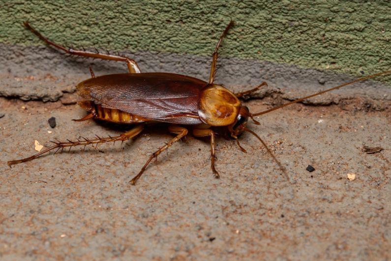Dedetização de Baratas: livre-se desses insetos asquerosos | Salvador | Bahia